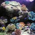 image 006-underwater-world-jpg