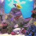 image 007-pretty-fishies-jpg