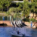 image 027-dolphins-in-action-jpg