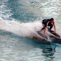 image 028-dolphin-surfing-jpg