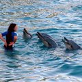 image 029-communicating-with-dolphins-jpg