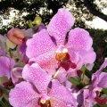 Singapore - Sentosa Orchid Garden