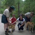 image healsville-sanctuary-patting-dingo-jpg