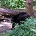 image 008-nwt-bear-jpg