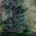 image 020-spiderweb-22-10-jpg