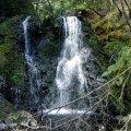 image hogarth-falls-2007-peoples-park-strahan-tas-jpg