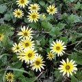 Weeds & Wildflowers - Australia