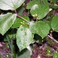 image wildberry-bc-jpg