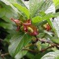image wildflower-bc-jpg